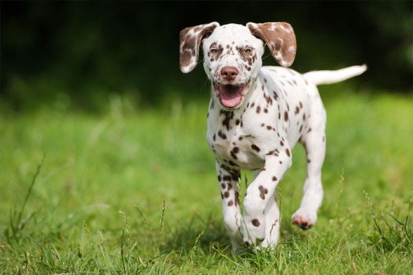 Cute puppy walking on grass