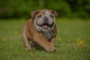 funny dog running in garden