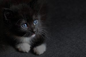 Cute kitten inside