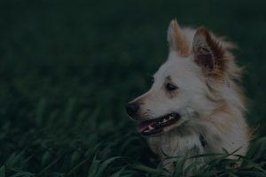 Dog in grass portrait